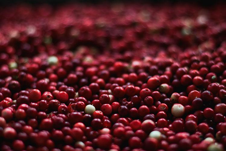 berries cranberries