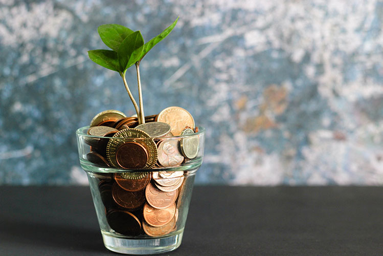 coins and plant in clear glass