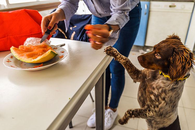 dog eating cantaloupe
