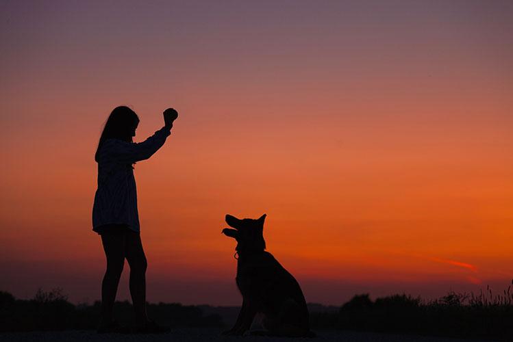 girl dog training