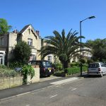 houses and palm tree in london