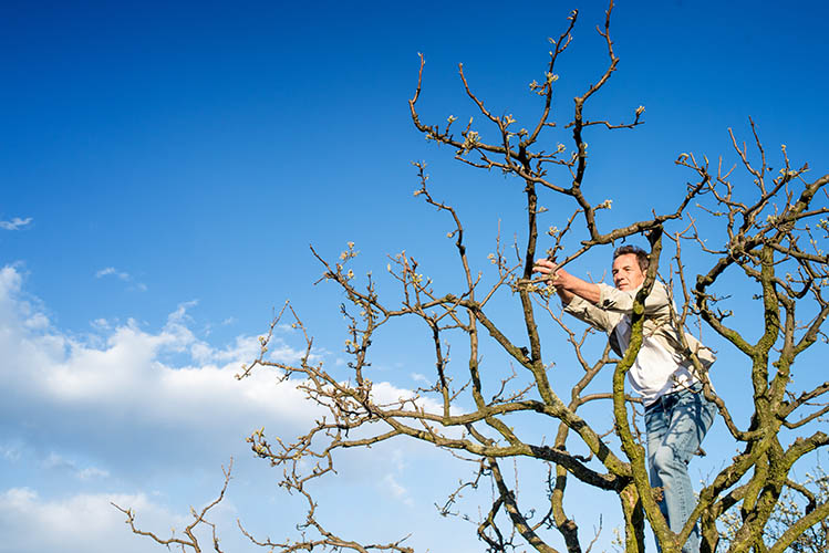 man pruning branches at tree