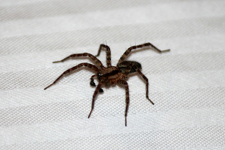 spider on table