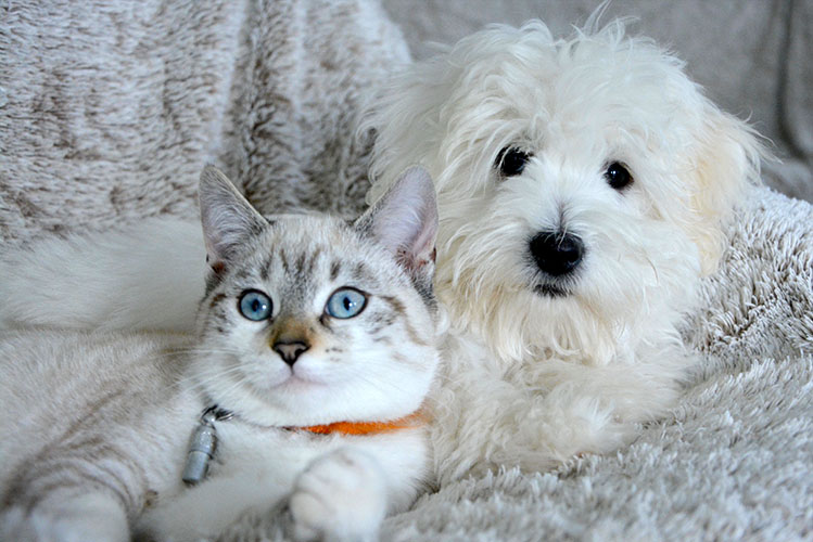 white dog and white cat in bed